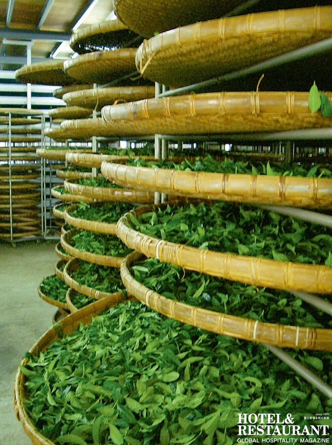 3. 요청 및 산화_ 대나무 광주리에 찻잎을 펼쳐 놓고 일정 조건 하에서 요청 및 산화를 진행하는 모습